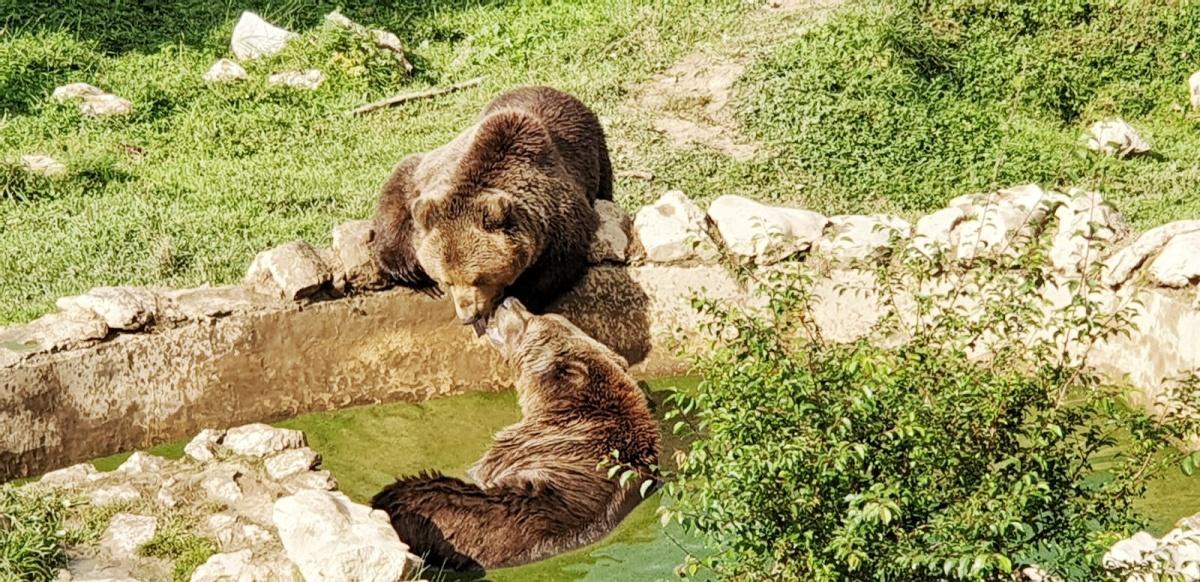 Kuterevo Bear Refuge
